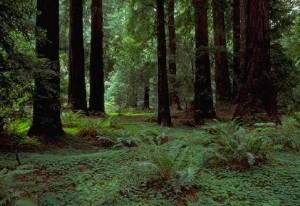 bosques templados 4