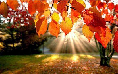 Compartiendo vida… ¡Bienvenido otoño!