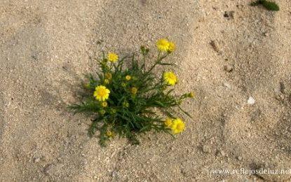 Crecer en el desierto